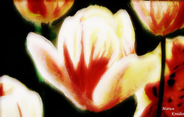 Tulipe rouge -Dessiner par  - marwa kreidieh